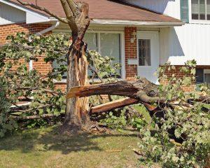 Tree storm damage services