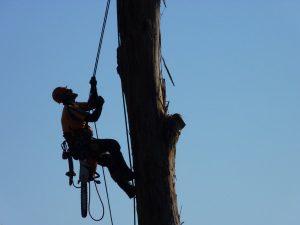 Tree service climber